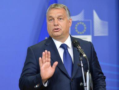 """Krystyna Pawłowicz radzi Węgrom, jak głosować w wyborach. """"Precz z..."""
