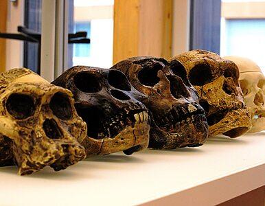 """""""Populacja duchów"""" z Afryki Zachodniej. Naukowcy znaleźli dowody na..."""