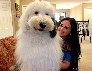 """Ten pies jest gigantyczny! Pracuje w szpitalu, a """"po godzinach"""" robi..."""