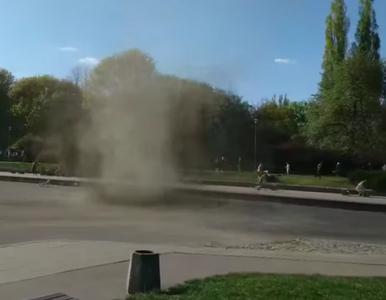 Diabełek pyłowy na Polu Mokotowskim. Do sieci trafiło nagranie
