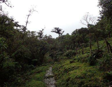 Badacze z Gdańska założą rezerwat w Kolumbii. Chcą ratować bezcenne gatunki
