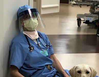 Pies wspierał lekarkę walczącą z koronawirusem. Ich zdjęcie stało się...
