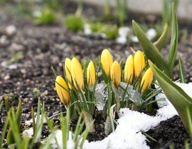 Pogoda długoterminowa. Wróci śnieg