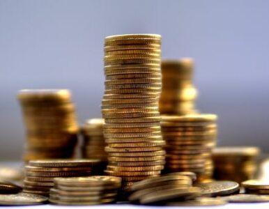 Provident zarabia dzięki polskim klientom