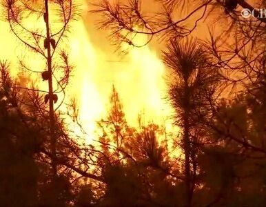 Miliarder pomaga poszkodowanym w pożarach w Kalifornii. Wykorzystał do...
