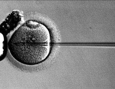 Nowicka: ustawa aborcyjna powiększa podziemie aborcyjne