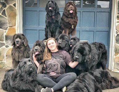 To prawdopodobnie największe psy na świecie. 28-latka ma ich aż dziewięć