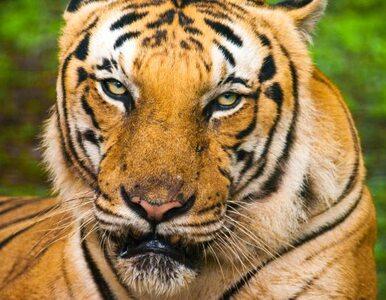 Ekolodzy alarmują: zwierzęta wymierają coraz szybciej