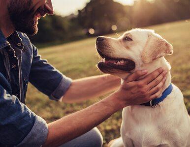 Ile lat ma twój pies? Naukowcy obalają popularny mit i proponują własną...