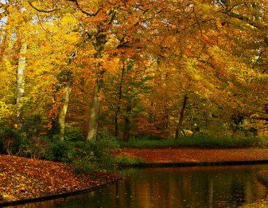 Nadchodzi złota, polska jesień. Będzie cieplej