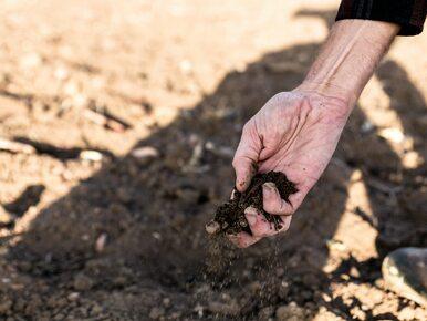 Sytuacja w rolnictwie może być dramatyczna. Plony o kilkadziesiąt...