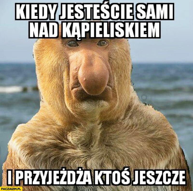 Memy Z Nosaczem Sundajskim Galeria Zdjęć Wprostpl