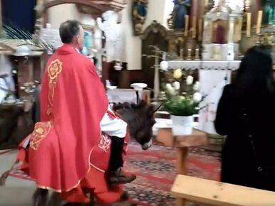 Dolny Śląsk. Ksiądz wjechał do kościoła na osiołku. Część wiernych oburzona