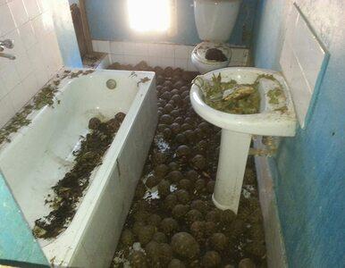 """10 000 zagrożonych żółwi w mieszkaniu na 2. piętrze. """"Odór był nie do..."""