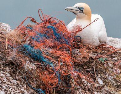 Podjęto decyzję. W całej UE zakazane zostaną plastikowe kubki, sztućce i...