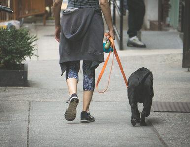 Ograniczenia w poruszaniu się w związku z koronawirusem. Co ze spacerami...