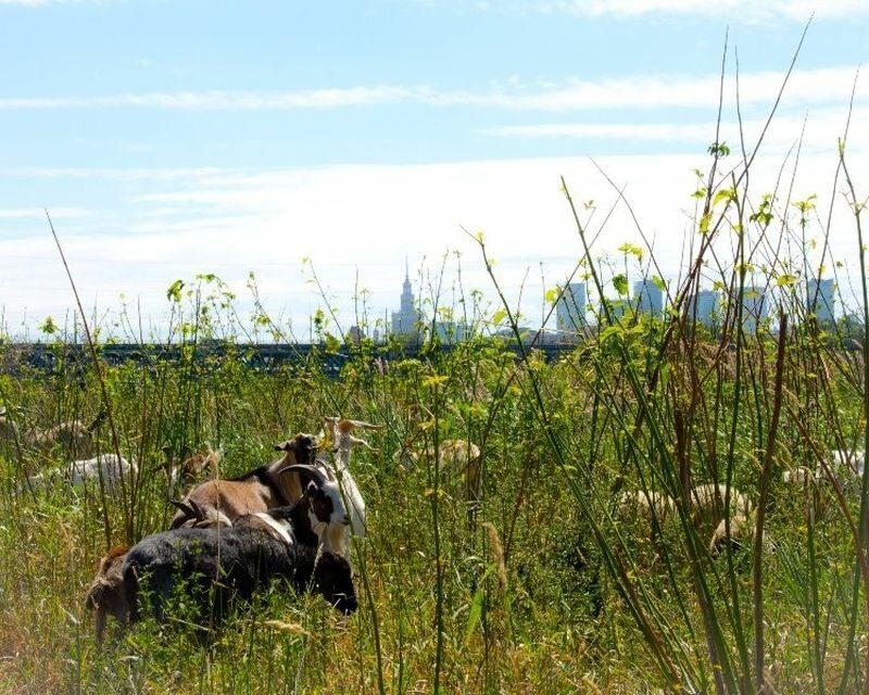 Kozy na tle panoramy Warszawy