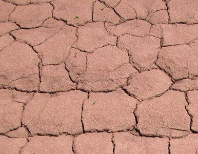 Blisko jedna trzecia Francji walczy z dotkliwą suszą