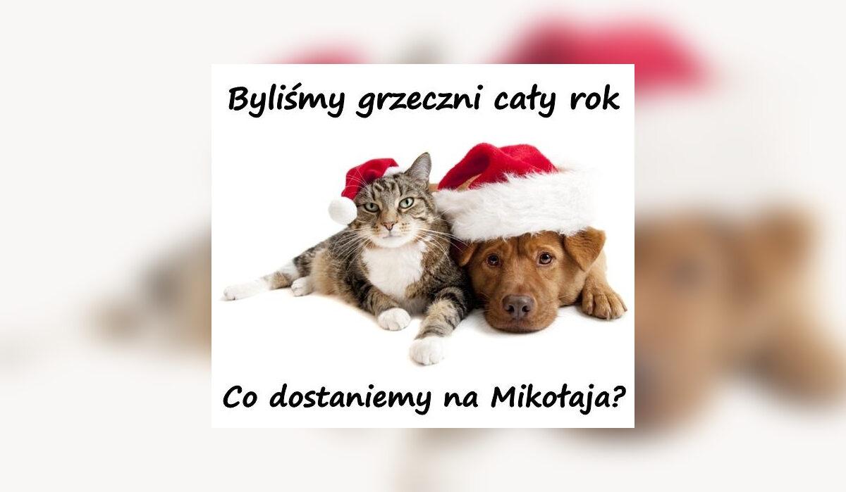 Memy z okazji Mikołajek