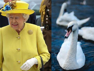 5-latka poprosiła królową o łabędzia. Elżbieta II odpowiedziała na jej list